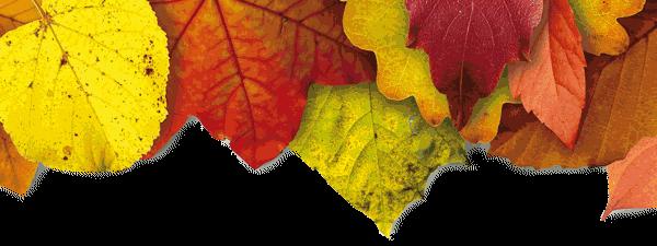 Goldener Herbst im Hotel Eberhard
